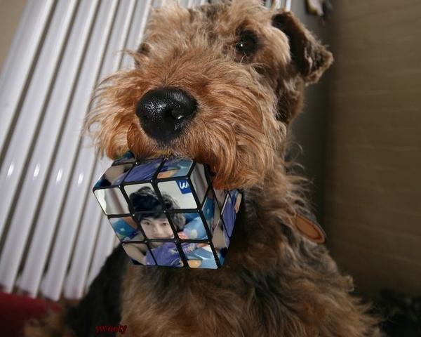 Cube1b